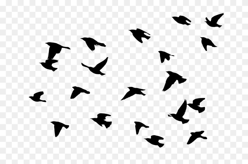 Flying Bird Png Transparent Flying Bird Images - Flock Of Birds PNG