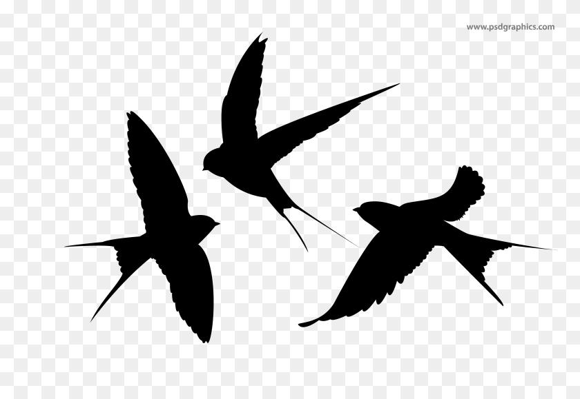Flying Birds Vector - Birds Silhouette PNG