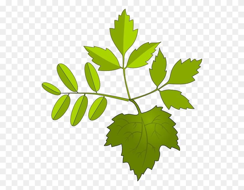 Foliage Clip Art - Foliage Clipart