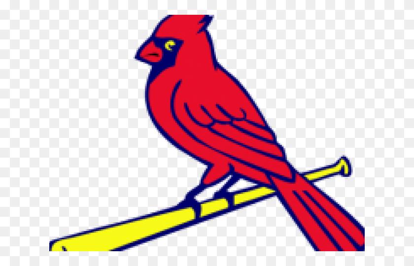 Cardinals - find and download best transparent png clipart images at  FlyClipart.com