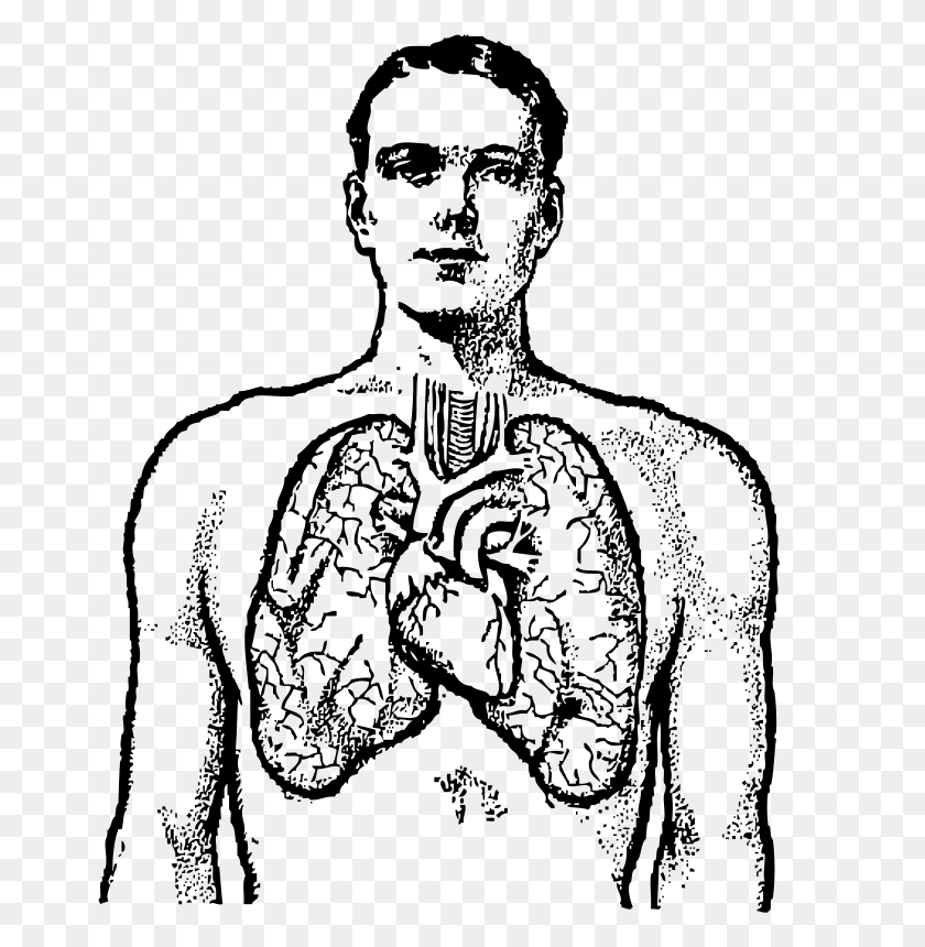 763x800 Free Clipart - Lungs Clipart Black And White