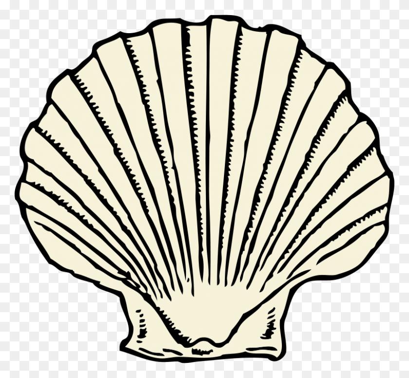Free Clipart Scallop Shell Johnny Automatic - Scallop Shell Clip Art