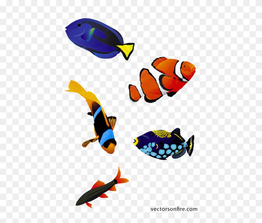 Free Colorful Aquarium Fish - Aquarium Clipart
