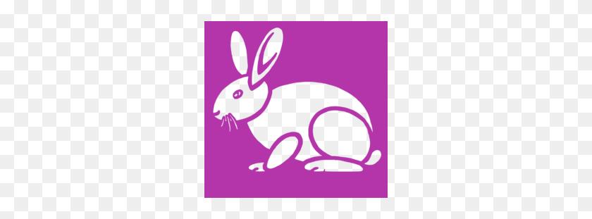 Free Download Mammal Clipart European Rabbit Easter Bunny Bunny - Bunny Nose Clipart