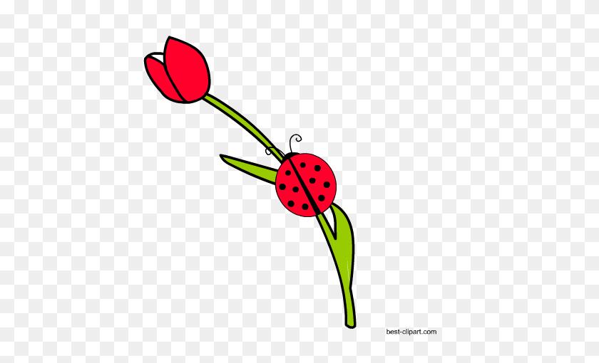 Free Ladybug Or Ladybird Clip Ar - Mexican Clipart