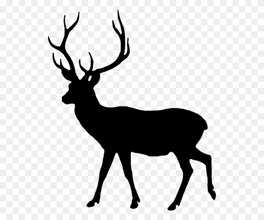 Free Photo Animal Silhouette Fallow Deer Male Wild Dama Dama - Deer Silhouette PNG