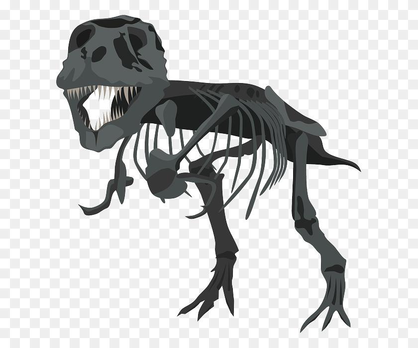 Free Photo Carnivore Skeleton Dinosaur Tyrannosaurus Rex Dino - Dinosaur Bones PNG
