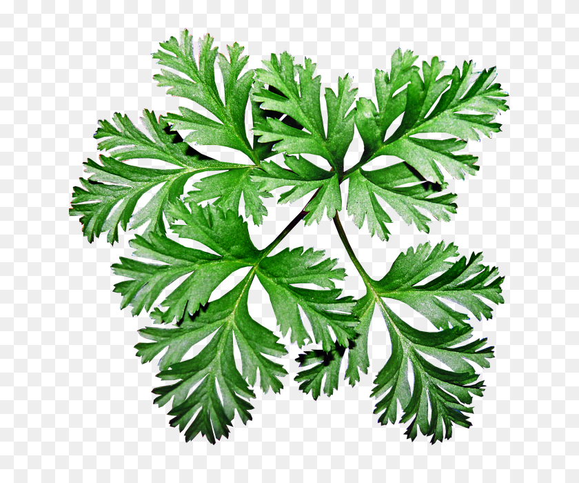 Free Photo Garden Anemone Leaves Greenery Plant - Greenery PNG
