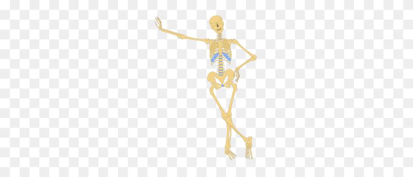 Free Skeleton Clipart Png, Skeleton Icons - Dancing Skeleton PNG