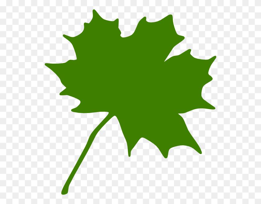 552x597 Free To Use - Free Eucalyptus Clipart