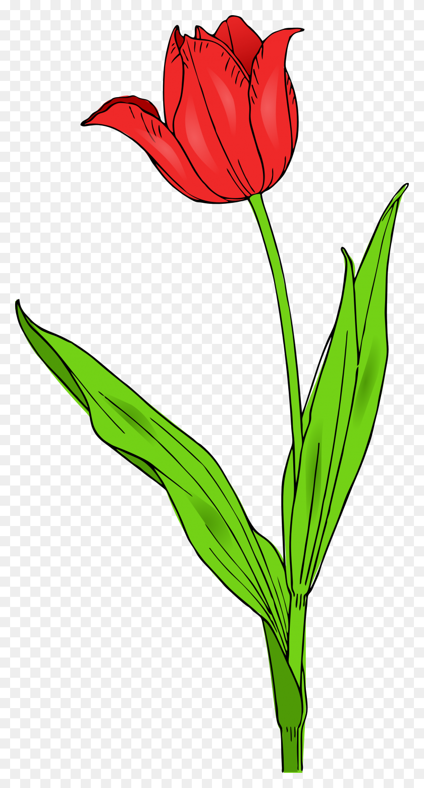Free Tulip Clip Art Pictures - Flower Clipart
