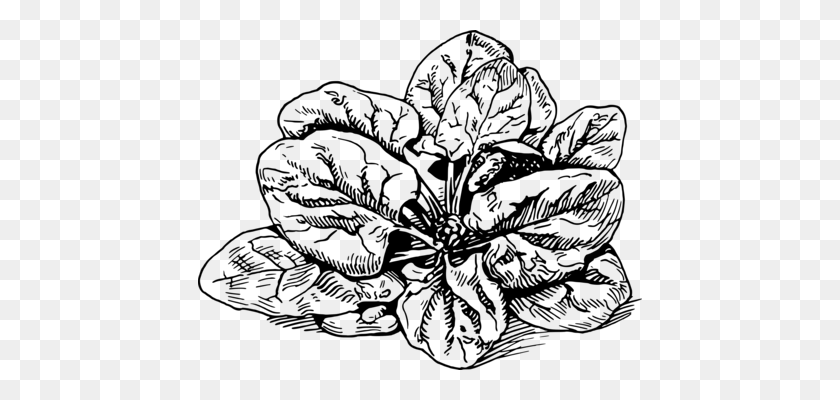 Black And White Flower clipart - Drawing, Vegetable, Plant, transparent clip  art