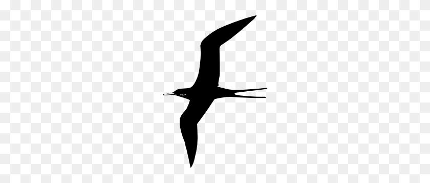 204x297 Frigate Bird Clip Art Ink Birds, Art And Clip Art - Bird Of Paradise Clipart