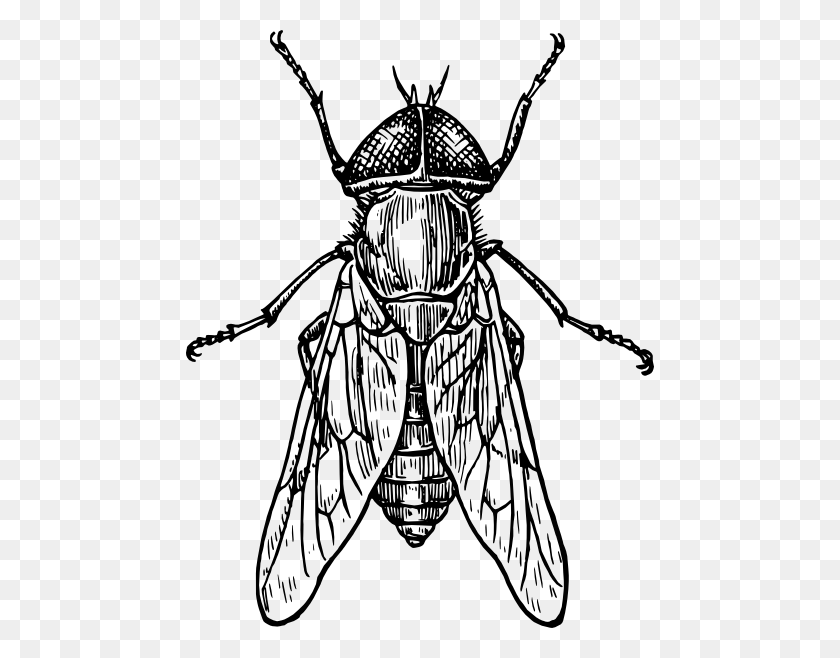 Gadfly Insect Clip Art Vector Entomology - Mosquito Clipart Black And White