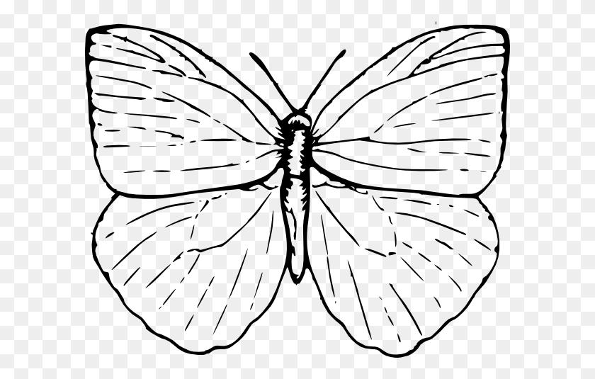 Clip Art Butterfly Net
