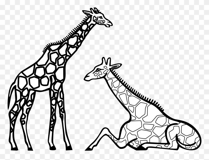 Giraffes Giraffe Coloring - Zebra Clipart Black And White