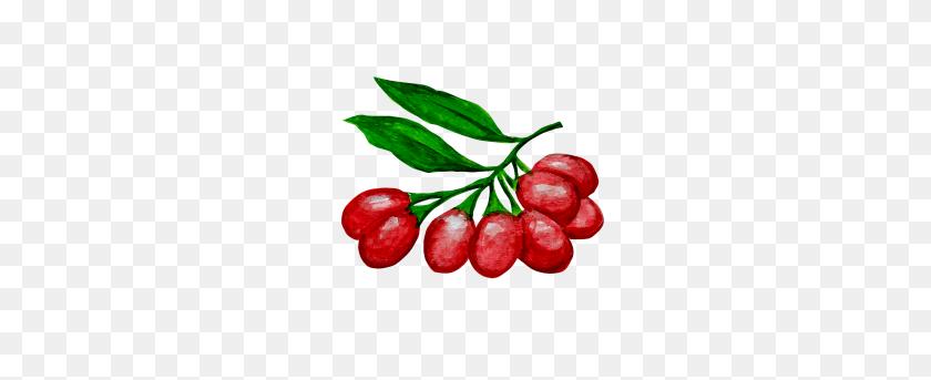 379x283 Goji Berries Transparent Png Image - Berries PNG