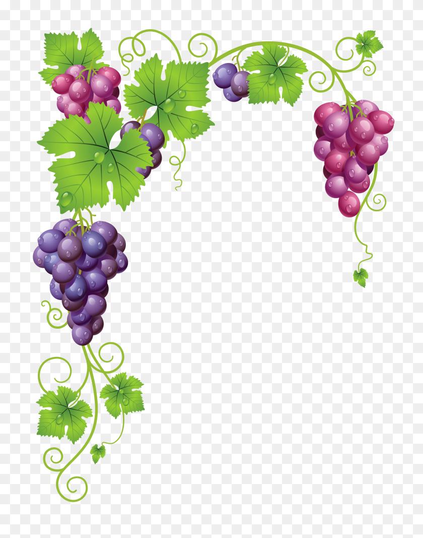 Grapes Vines Grape Vines, Grape - PNG Vines