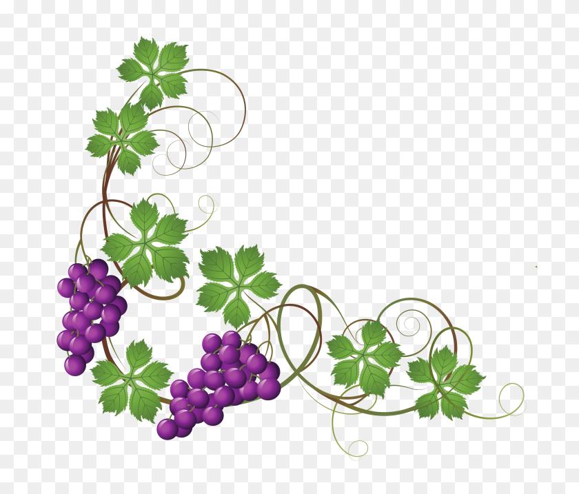Grapes Vines Vines - Uvas Clipart