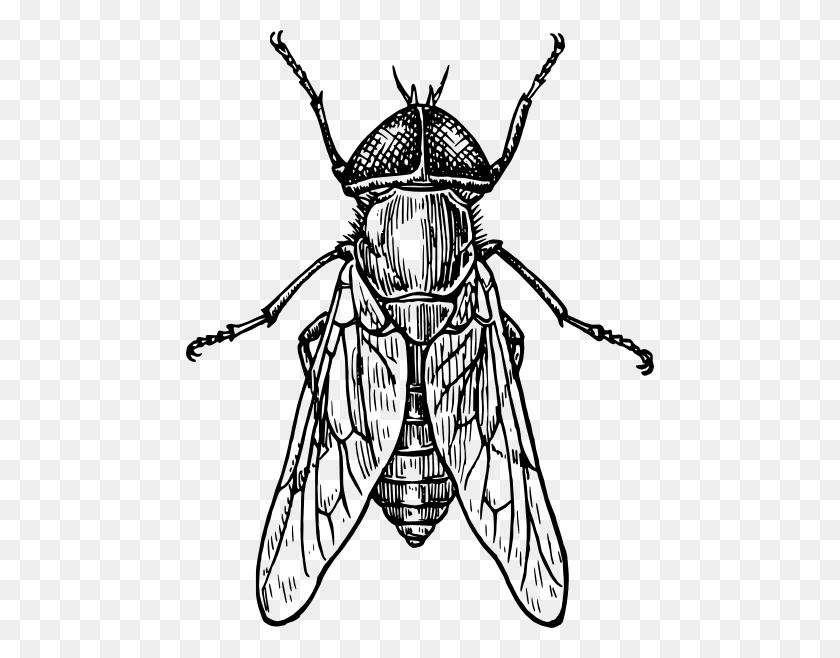 Grasshopper Clip Art Black And White, Free Grasshopper Cliparts - Grasshopper Clipart