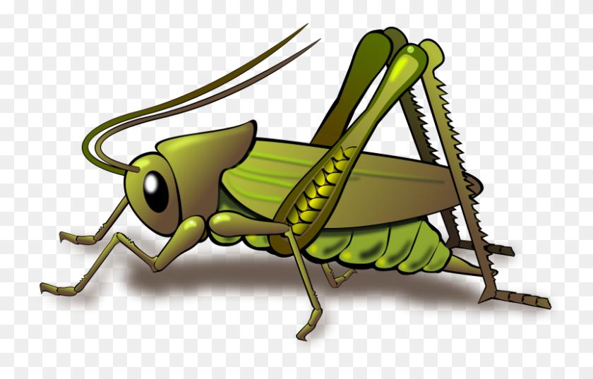 Grasshopper Insect Black And White, Grasshopper Clip Art Black - Grasshopper Clipart Black And White