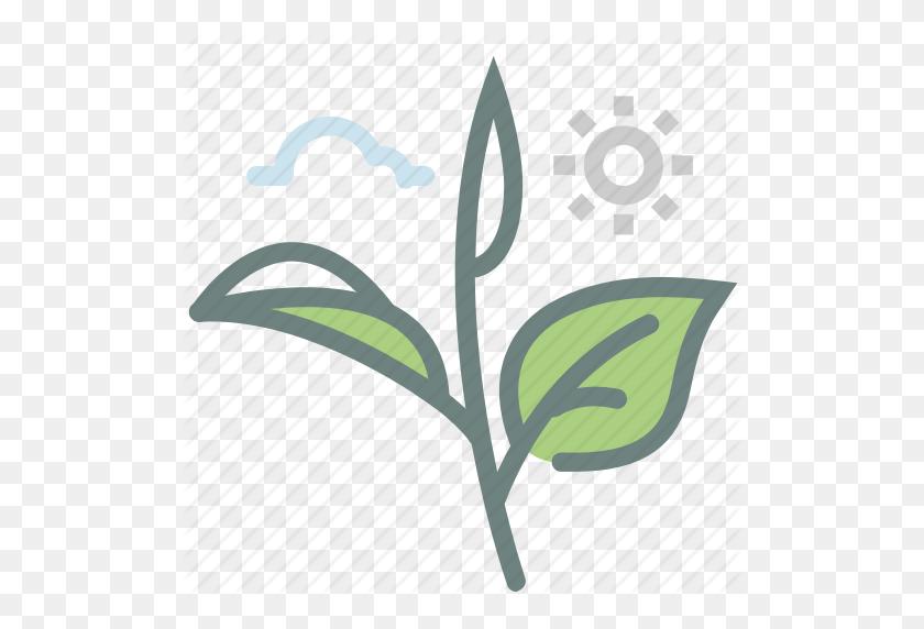 Green Tea, Herb, Leaf, Leaves, Matcha, Tea, Tea Leaves Icon - Tea Leaf PNG