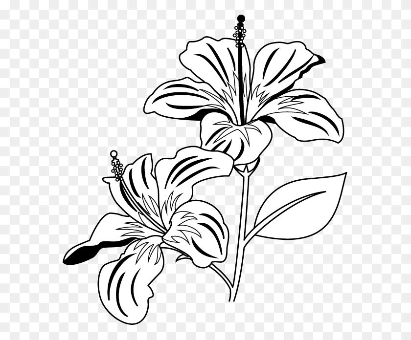 Flower Black And White Flower Black And White Lotus Flower Clip