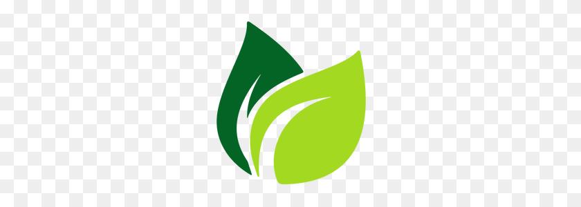 Halmira Single Origin Assam Green Tea Leaves Buy Tea Online Tea Leaves Png Stunning Free Transparent Png Clipart Images Free Download