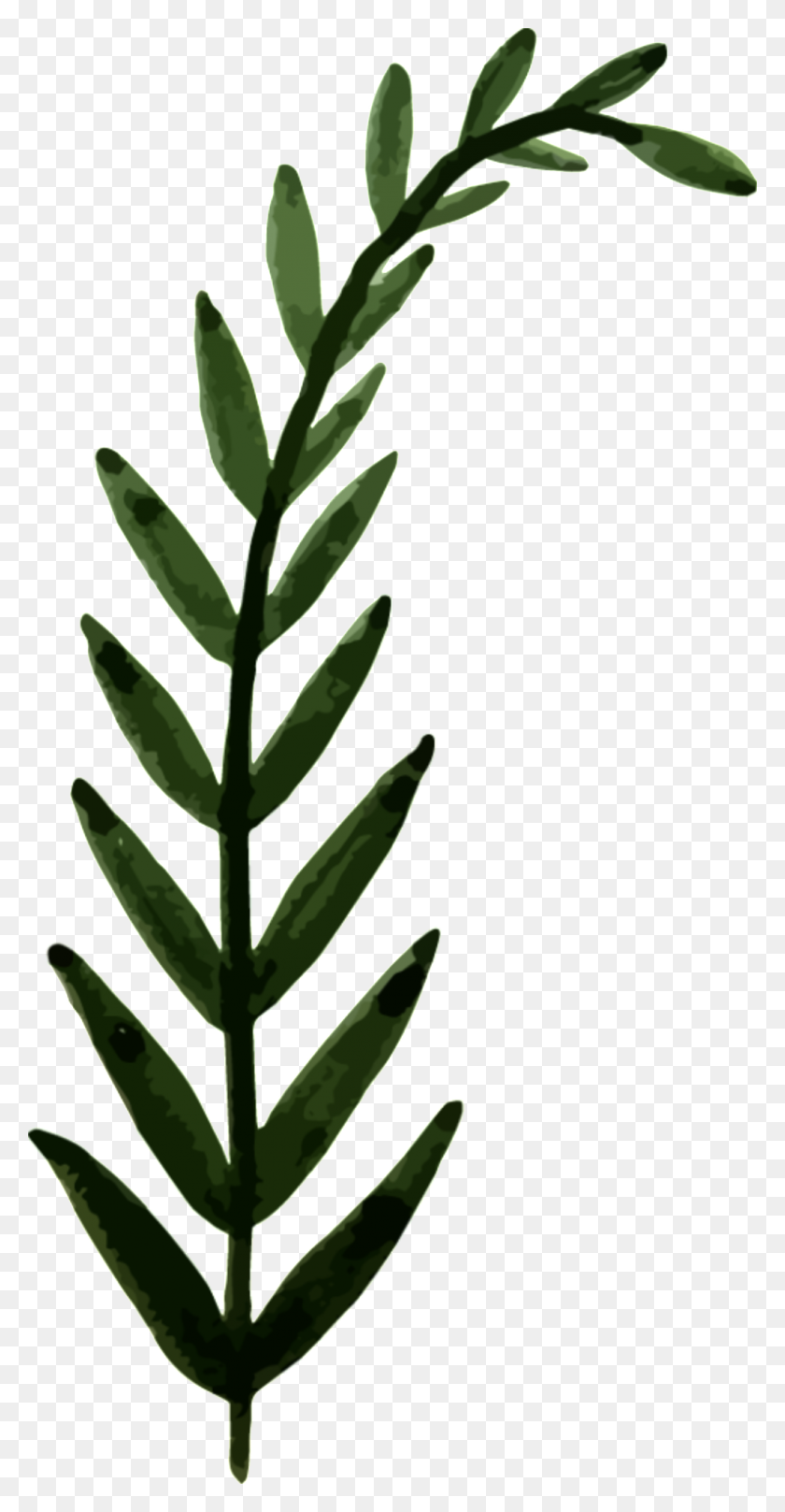 Hand Painted Leaves Png Transparent Free Png Download Png Vector Tea Leaf Png Stunning Free Transparent Png Clipart Images Free Download Dahlia flower png orange transparent image. hand painted leaves png transparent