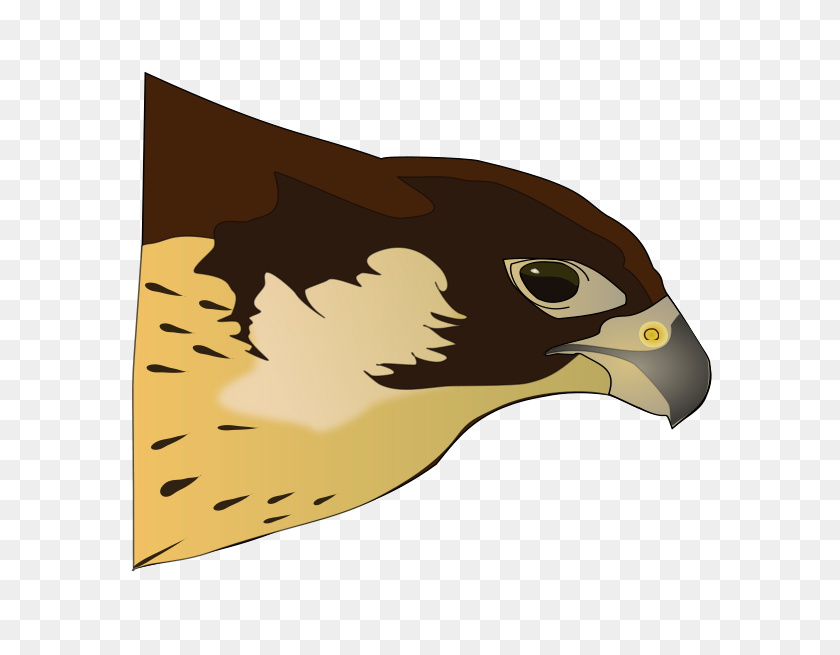 Free Hawk Cliparts, Download Free Clip Art, Free Clip Art on Clipart Library