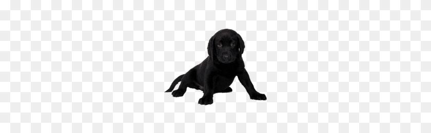 200x200 High Quality Dogs Transparent Png Images - Sad Dog PNG