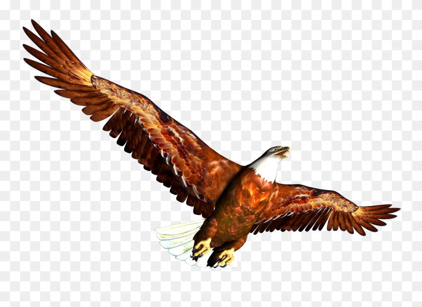 1600x1131 High Resolution Clip Art Free - Free Eagle Clipart