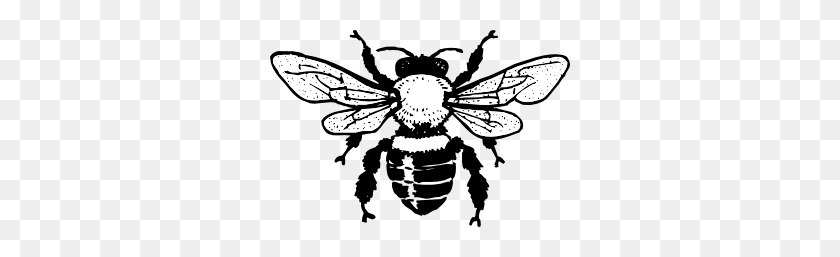 Honey Bee Clip Art Clipart Bee Black And White Stunning Free Transparent Png Clipart Images Free Download