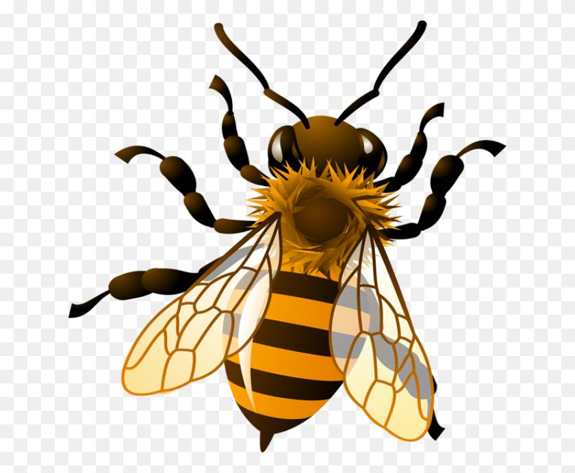 Honey Bee Clipart Honey Bee Clip Art Pea's Bees - Cicada Clipart
