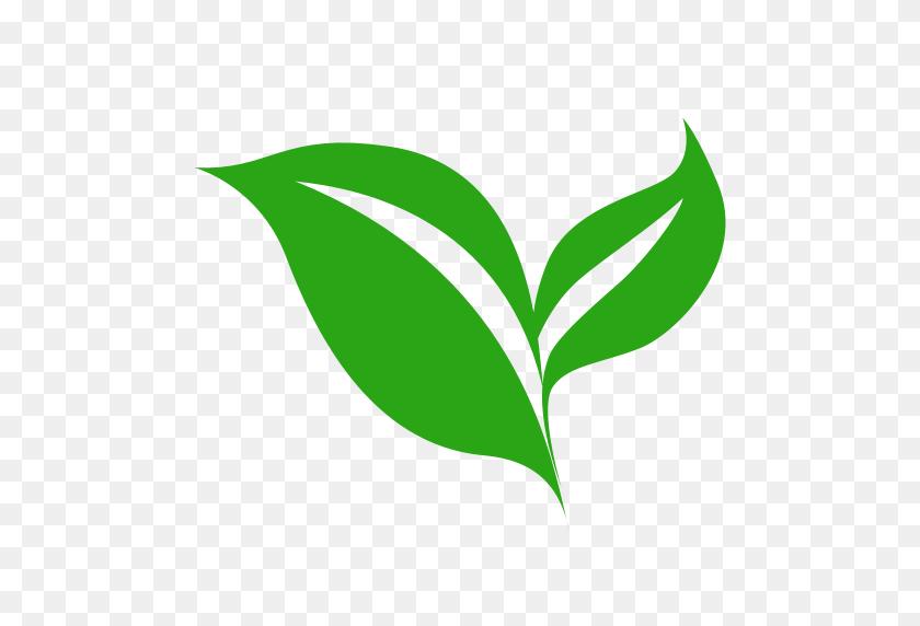 Green tea, leaf, green png | PNGEgg