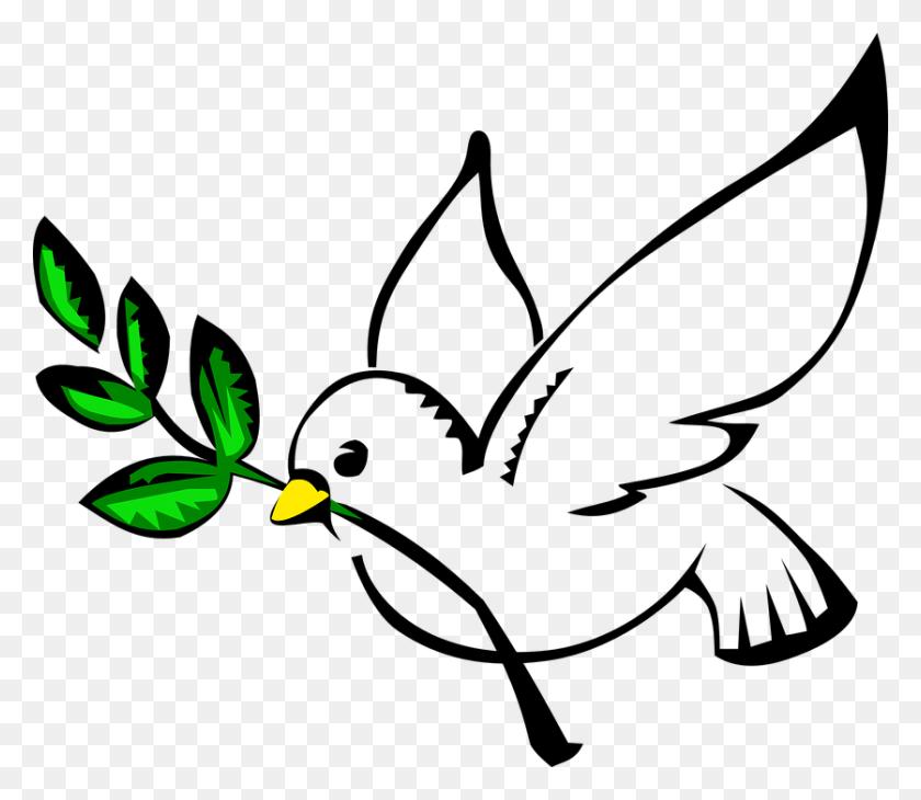 Hoy De Enero, Se Celebra El Escolar De La Paz Y La No - Paloma Blanca PNG