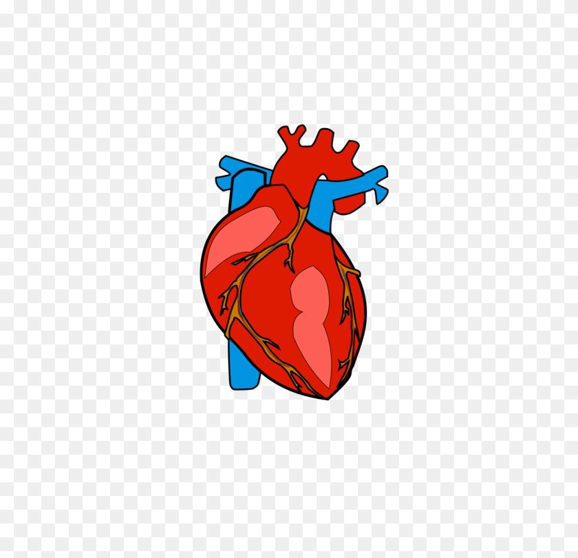 Human internal organs brain,lungs,heart – Free vectors, illustrations,  graphics, clipart, PNG downloads