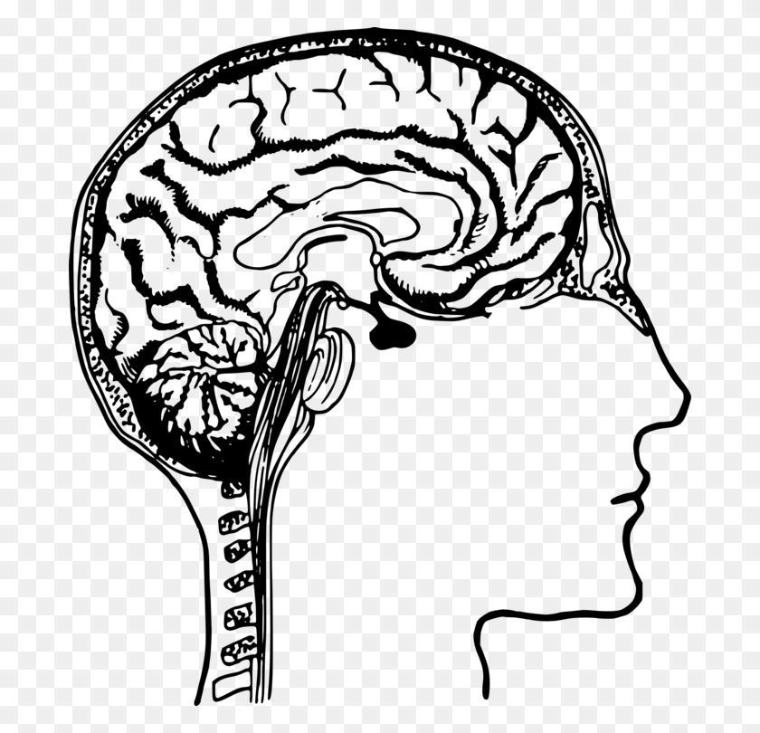 Human Brain Human Body Human Head Drawing - Free Brain Clipart