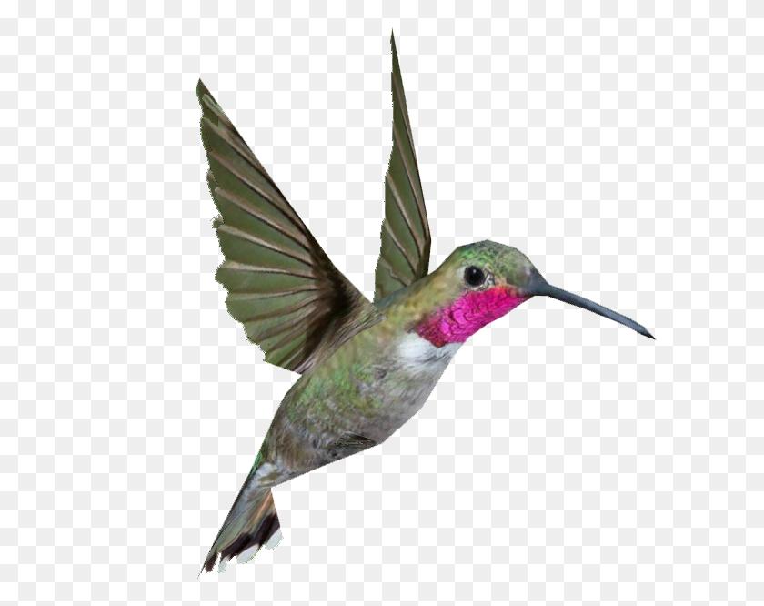 Hummingbird Png Transparent Hummingbird Images - Hummingbird PNG