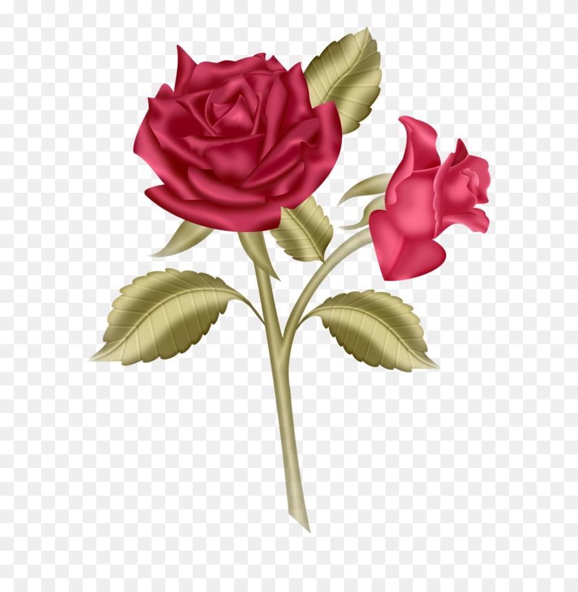 612x800 Iandeks Fotki Art Rose Clip Art And Album - May Flowers Clip Art