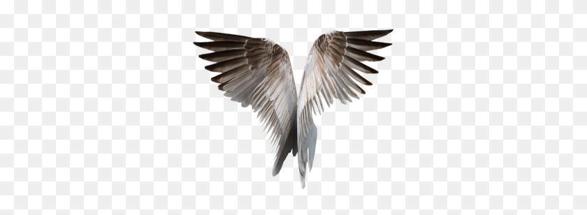 Idei Wings, Birds, Wings Png - Eagle Wings PNG