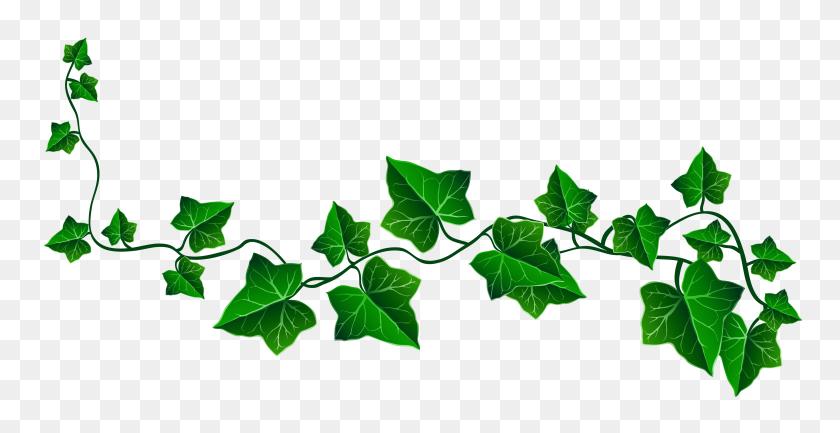 4960x2377 Image - Plant PNG
