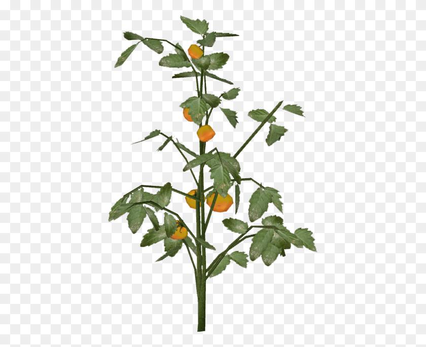 Image - Tomato Slice PNG