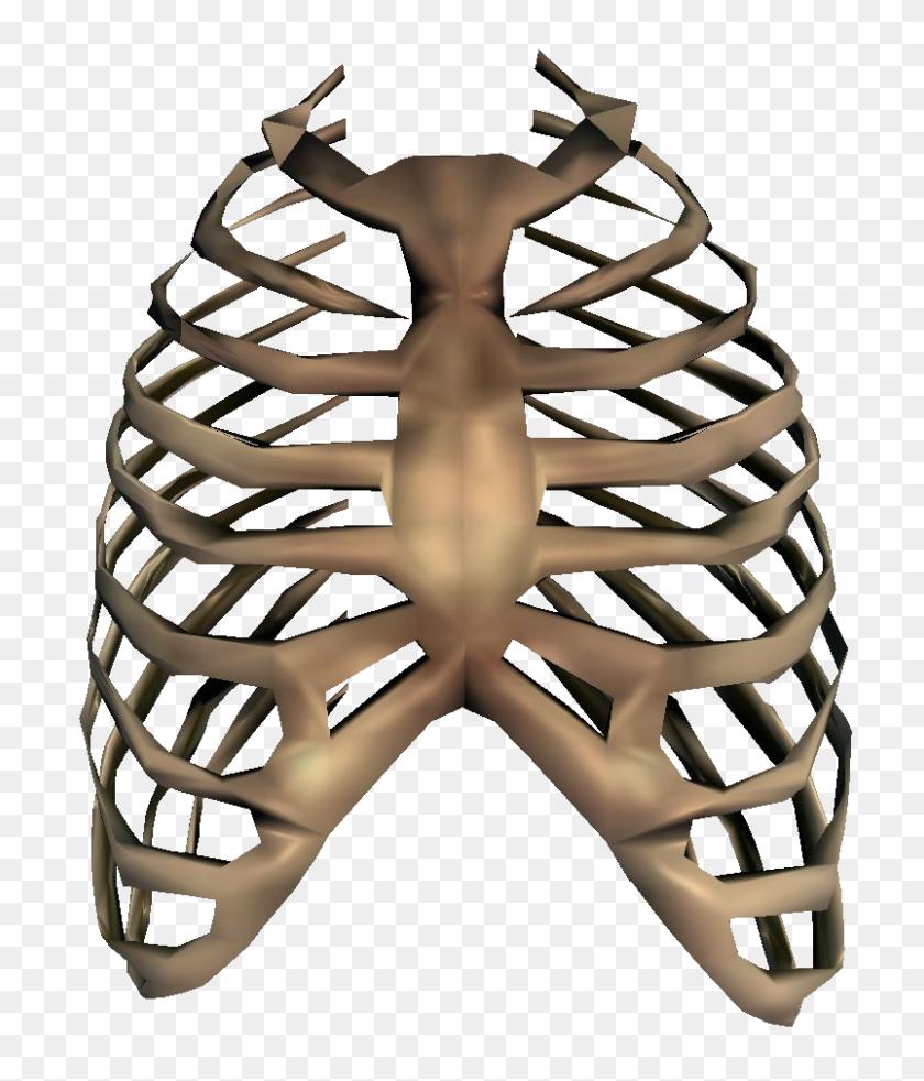 Image - Bones PNG