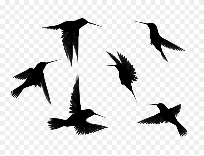 Images Bird Silhouette - Birds Silhouette PNG