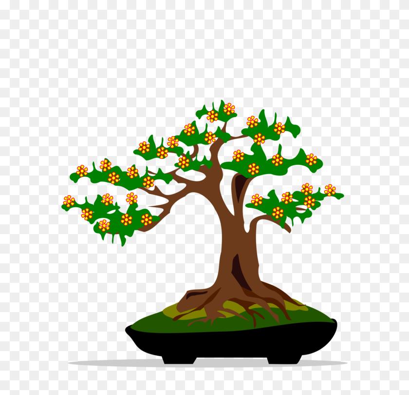 Indoor Bonsai Tree Houseplant - Fig Tree Clipart