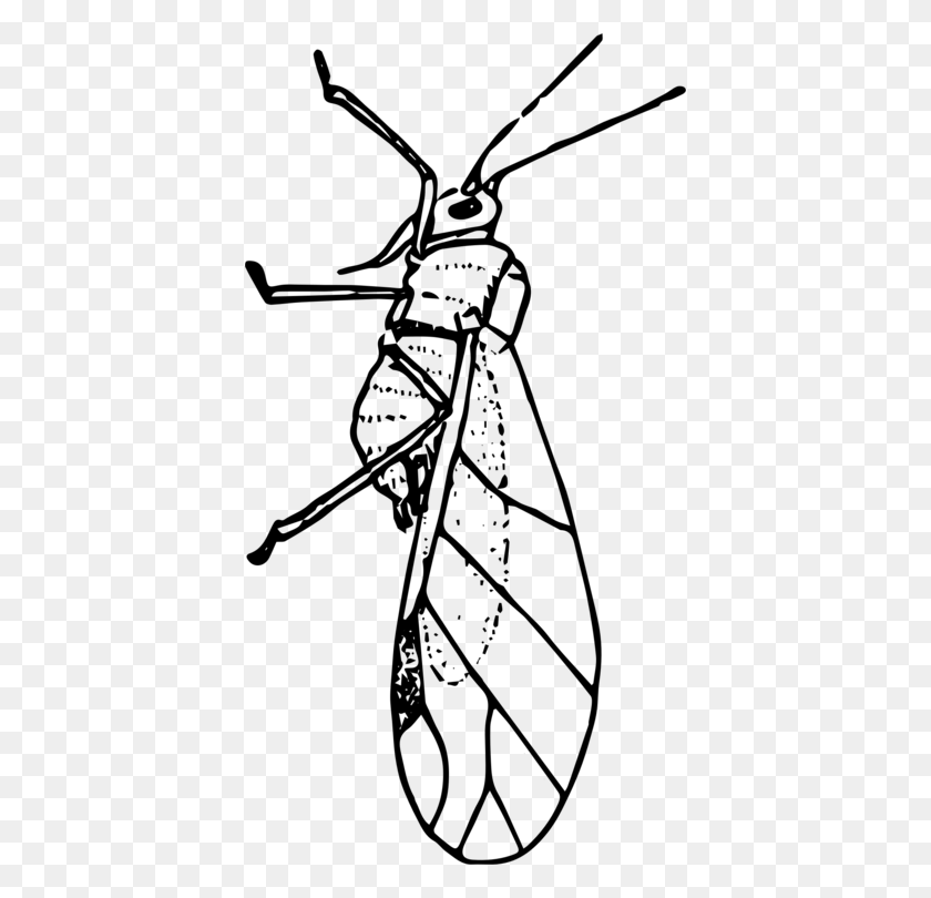 Insect Aphid Ladybird Beetle Line Art Drawing - Mosquito Clipart Black And White