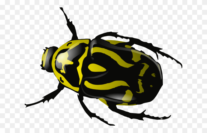 Insect Clipart - Cricket Insect Clipart
