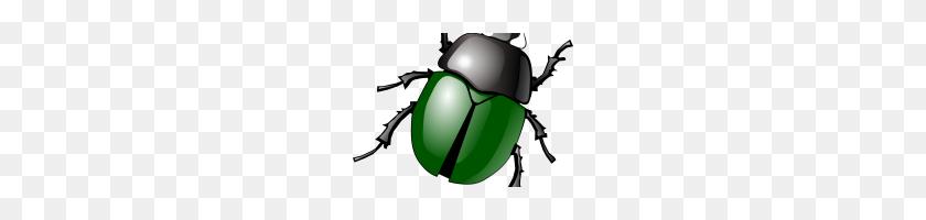 Insect Clipart Insect Clipart Clipart Grasshopper Insects - Grasshopper Clipart