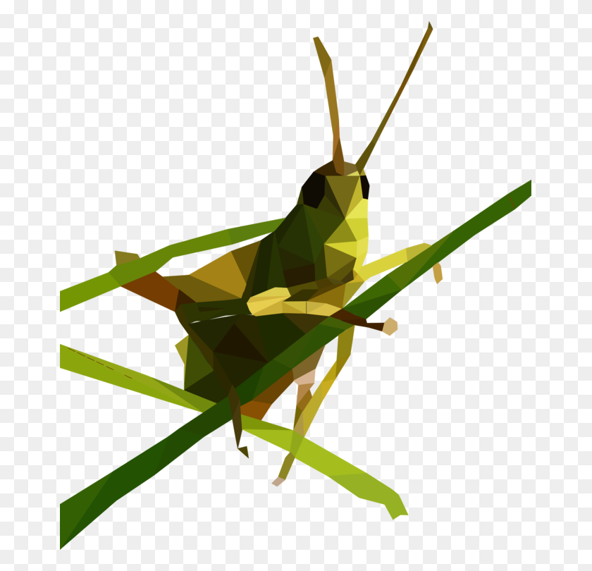 Insect Grasshopper Caelifera Locust Omocestus Viridulus Free - Cricket Insect Clipart